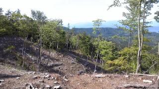 箱根の山、道了尊ー明神ヶ岳ー明星ヶ岳ー塔の峰ー塔之沢、塔の峰近くの伐採
