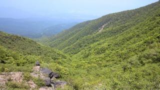 箱根の山、道了尊ー明神ヶ岳ー火打石岳ーうぐいす茶屋ー仙石バス停 その6 鳥さんの谷