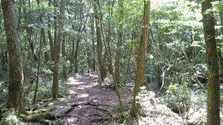 西湖 野鳥の森公園から青木ヶ原樹海遊歩道へ(携帯GPS、コンパスはどうなるか?)