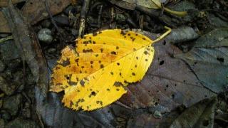 黄葉には早い場所だけど色づいた葉