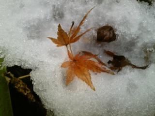 雪、朝にはだいぶ溶けたけど