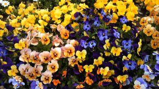カラフルな花々