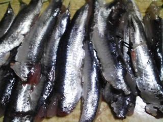 本日の晩ご飯のおかずの写真 神奈川の三浦産カタクチイワシの刺身、生若芽のヌタなど