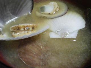 本日の晩ご飯のおかずの写真 神奈川の横須賀産メジナの刺身、青森産ホタテの稚貝の味噌汁、大根のあんかけなど