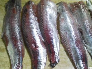 本日のお昼ご飯のおかずの写真 神奈川の長井産真イワシの刺身、黒毛和牛のもも肉の塩焼きなど