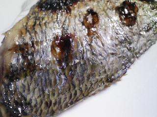 本日の晩ご飯のおかずの写真 北海道枝幸産干しホタテ貝を使ったご飯、しホタテ貝のクリームシチューなど