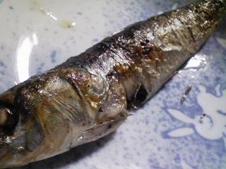 本日の朝ご飯のおかずの写真 神奈川の三崎産真イワシの塩焼き、煮干し出汁の味噌汁など