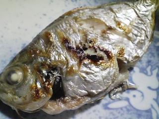 本日の晩ご飯のおかずの写真 神奈川の小柴産エボ鯛の塩焼き、北海道産の小さい花豆を使ったスープなど
