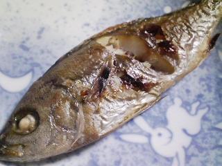 本日の朝ご飯のおかずの写真 神奈川の三崎産イサキの塩焼き、アジ出汁の味噌汁など