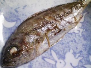 本日の朝ご飯のおかずの写真 神奈川の三崎産イサキの塩焼き、カマス出汁の味噌汁など