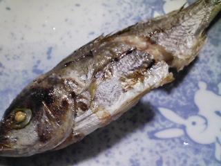 本日の朝ご飯のおかずの写真 神奈川の三浦産真アジの塩焼き、アジ出汁の味噌汁など