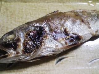 本日の晩ご飯のおかずの写真 北海道産鮭の白子のポン酢、バター焼き、神奈川の横須賀産イシモチの塩焼きなど
