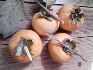 庭木の柿の収穫 2013年は4個