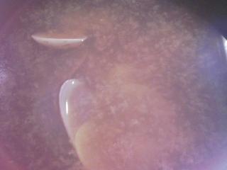 本日の晩ご飯のおかずの写真 千葉産ウルメイワシの刺身、千葉産アサリの味噌汁など