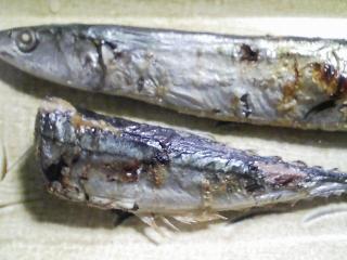 本日の晩ご飯のおかずの写真 宮城産サンマの塩焼き、くまさんのマカロニと北海道産パンダ豆を使ったスープなど