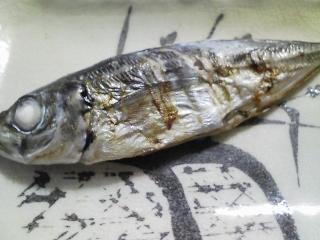 本日の朝ご飯のおかずの写真 神奈川の三崎産真アジの塩焼き、鰹節出汁の味噌汁など