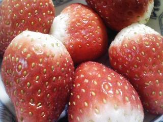 デザート 栃木産JAおやま イチゴ とちおとめ