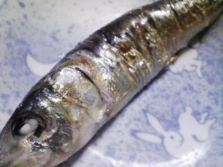 本日の朝ご飯のおかずの写真 北海道産真イワシの塩焼き、煮干し出汁の味噌汁など