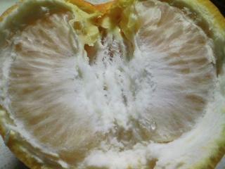 デザート 和歌山産 伊予柑を食べる